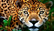 Iquitos Selva